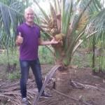 Tôi mê kinh doanh nhạc cụ nhưng cũng mê làm vườn. Tận dụng mảnh đất quê nhà, tôi đã đặt mua hơn trăm gốc dừa lùn Thái Lan về trồng và sau 2 năm, tôi đã bắt đầu nhìn thấy những thành quả của mình: Vườn dừa của tôi đang mùa trổ bông kết trái!